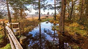 Fotos England Herbst Bäume Spiegelt Sumpf St.Leonards