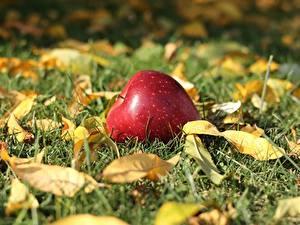 Bilder Äpfel Herbst Gras Blatt Unscharfer Hintergrund Natur