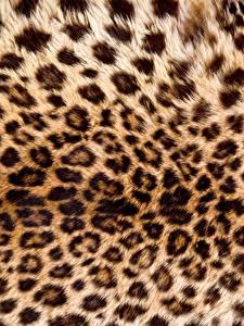 Fotos Textur Leopard