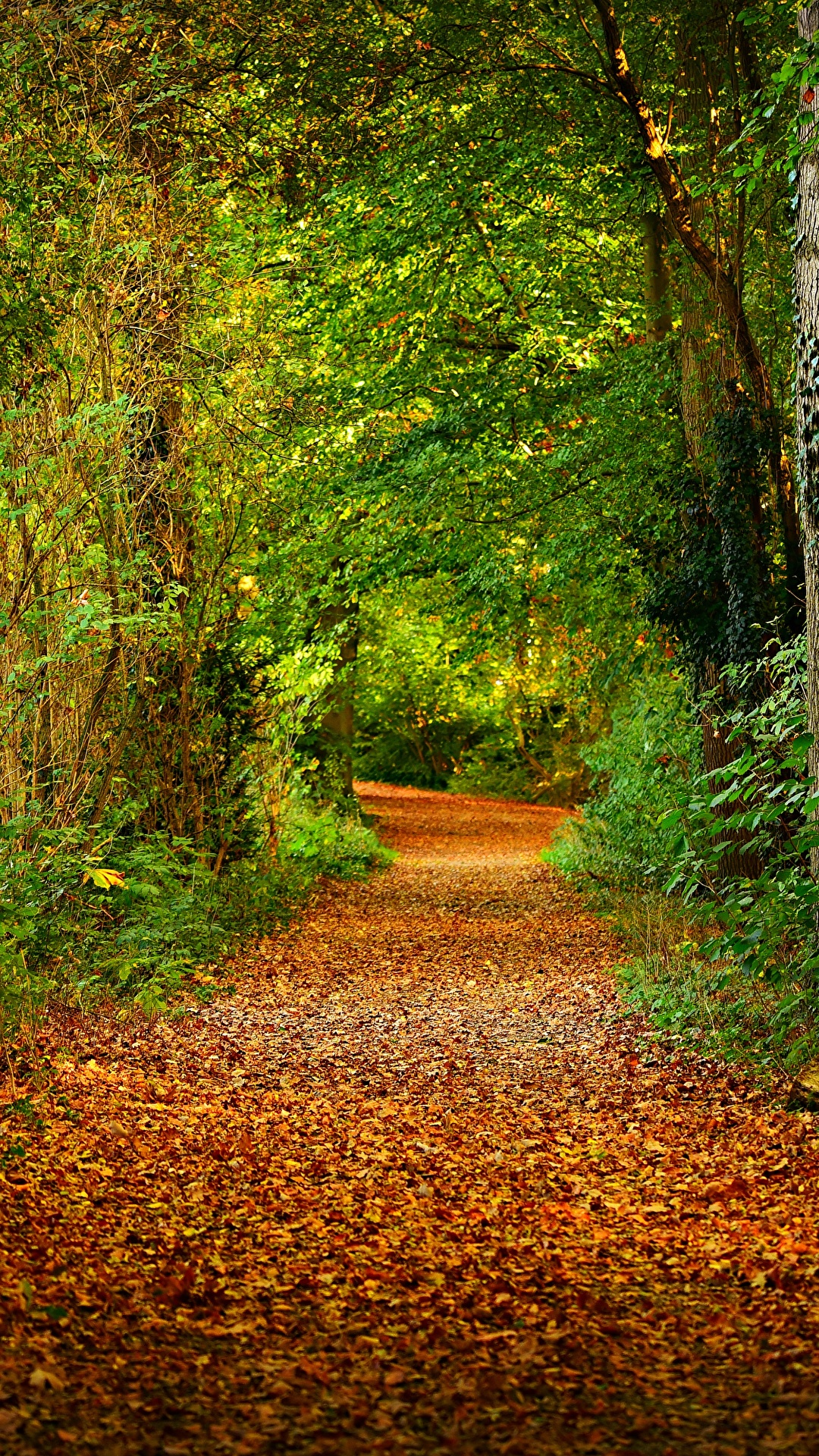 Photo Leaf Trail Nature Autumn Forests Trees 1080x1920