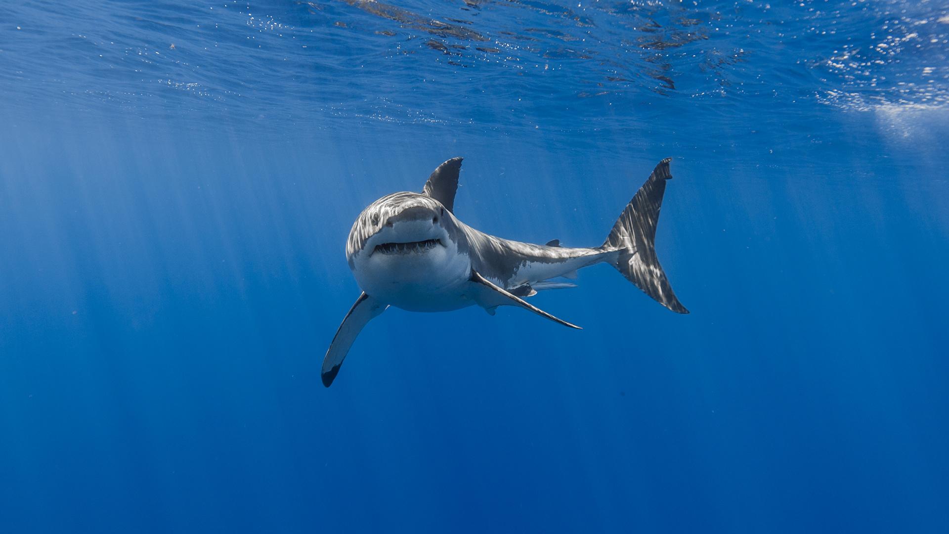 壁紙 1920x1080 サメ アンダーウォーターワールド 動物