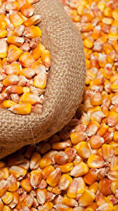 Bilder Kukuruz Viel Getreide Lebensmittel