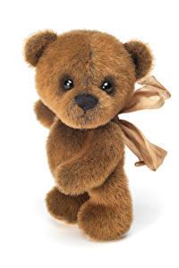 Fotos Spielzeuge Teddy Weißer hintergrund