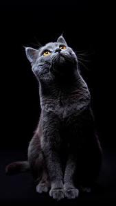 Hintergrundbilder Katze Schwarzer Hintergrund Blick Tiere