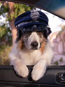 Desktop hintergrundbilder Hund Der Hut Polizei Lustige Fenster ein Tier