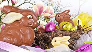 Fotos Feiertage Ostern Kaninchen Schokolade Ei Nest das Essen