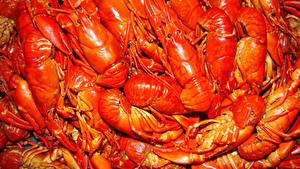 Images Seafoods Crayfish Many