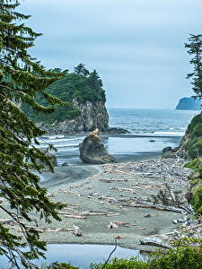 Hintergrundbilder USA Park See Washington Fichten Felsen Bucht Olympic National Park