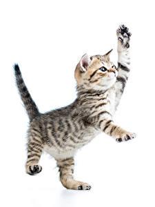 Hintergrundbilder Katze Weißer hintergrund Kätzchen Pfote