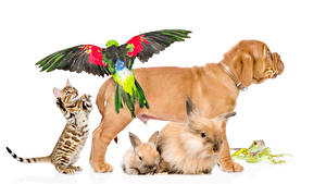 Wallpaper Dog Cats Rabbit Parrots Frogs White background Shar Pei Animals