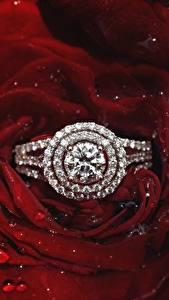 Bilder Rosen Großansicht Brillant Schmuck Ring Blütenblätter Blumen