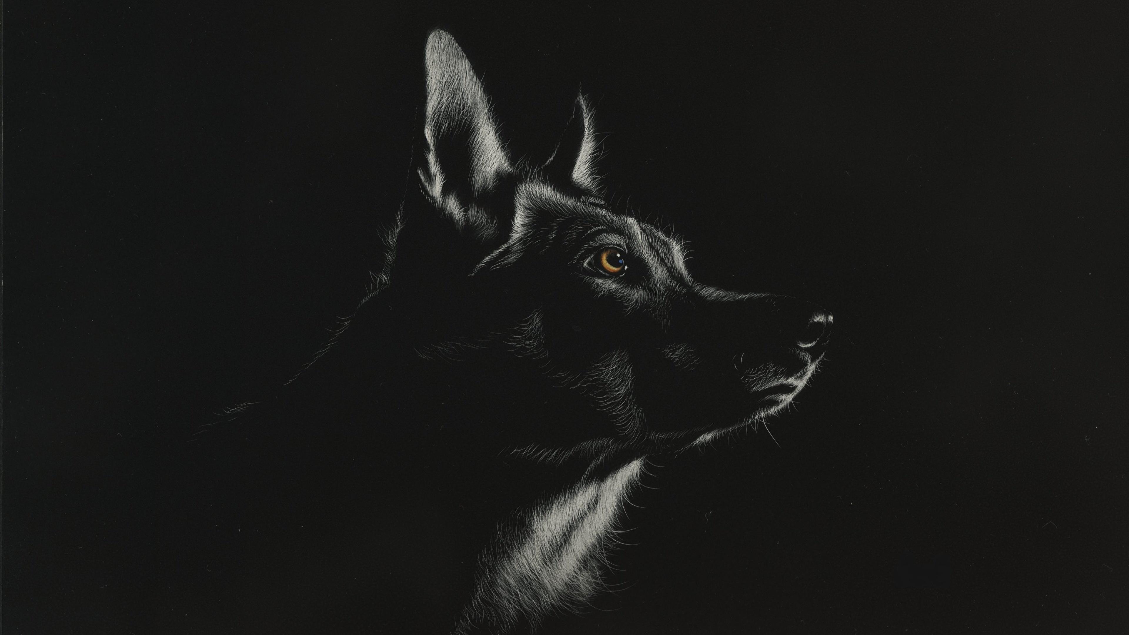 Fonds d'ecran 3840x2160 Loup Dessiné Tête Noir et blanc Fond noir Animaux télécharger photo