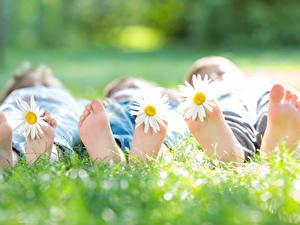 Bilder Kamillen Unscharfer Hintergrund Drei 3 Gras Hinlegen Bein Ferse kind