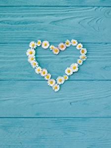 Bilder Kamillen Herz Bretter Vorlage Grußkarte