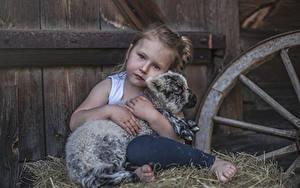 Hintergrundbilder Jungtiere Hausschaf Kleine Mädchen Starren Sitzend Heu Kinder