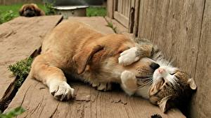 Pictures Dog Cat Sweet Animals