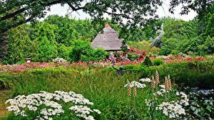 Hintergrundbilder Ungarn Parks Kamillen Strauch Gras Botanical garden Szeged Natur
