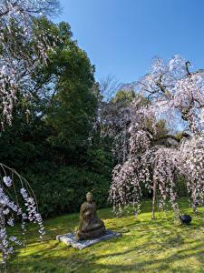 Fotos Park Frühling Blühende Bäume Skulpturen Buddha Natur