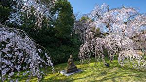 Fotos Park Frühling Blühende Bäume Skulpturen Buddha