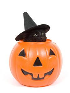 Hintergrundbilder Feiertage Halloween Katze Kürbisse Weißer hintergrund Kätzchen Der Hut