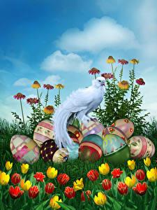 Fotos Ostern Feiertage Vögel Tulpen Ei Design Blumen