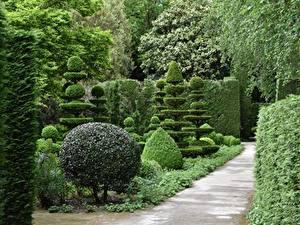 Bilder Garten Park Strauch Design Natur