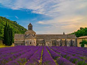 Bilder Frankreich Tempel Kloster Acker Lavendel Senanque Abbey Städte