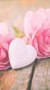 Bilder Valentinstag Rosen Bretter Rosa Farbe Herz Blumen