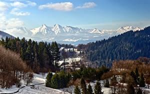 Bilder Gebirge Wälder Winter Landschaftsfotografie Schnee
