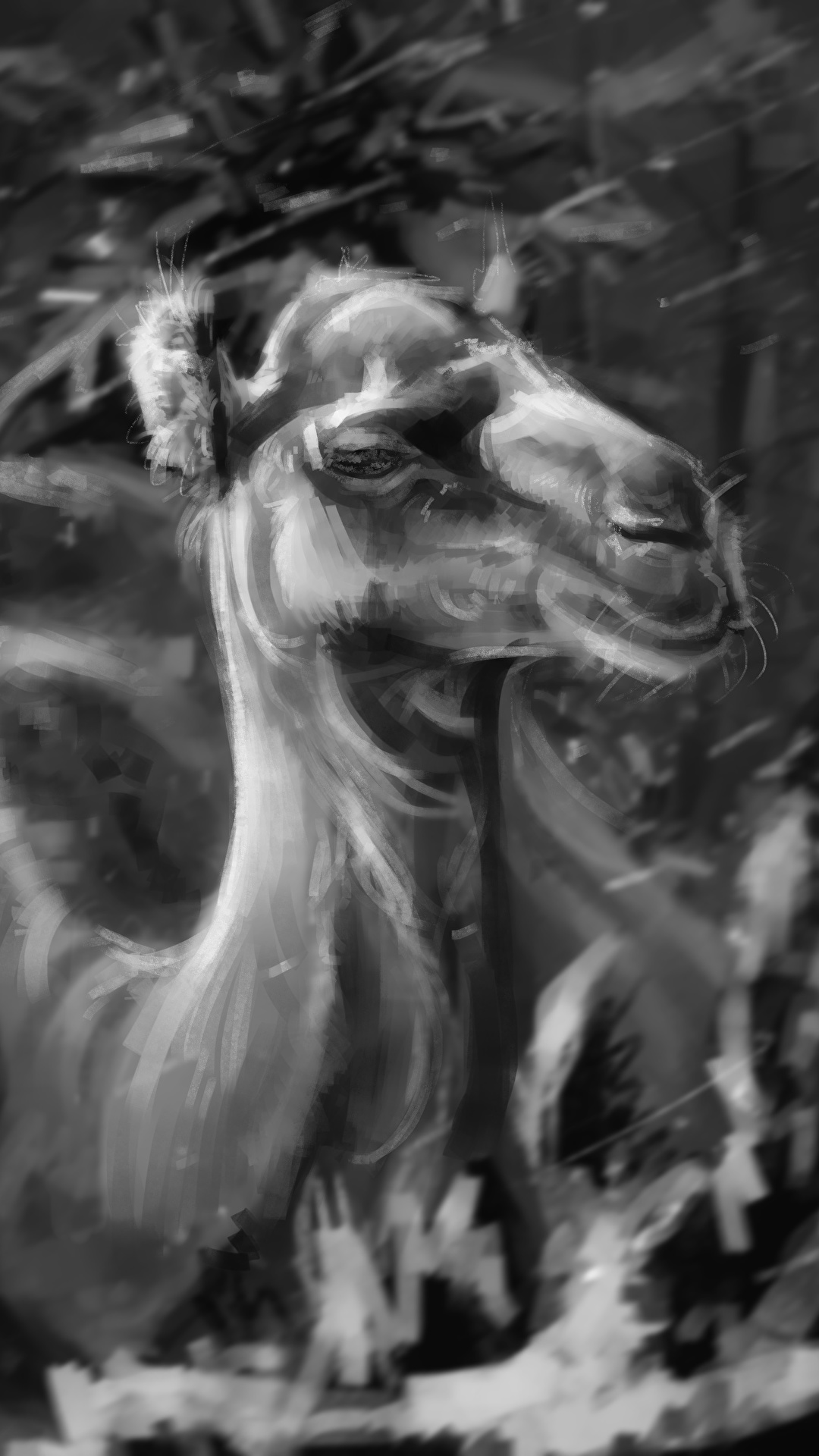 壁紙 1080x19 ラクダ 描かれた壁紙 白黒 頭 動物 ダウンロード 写真