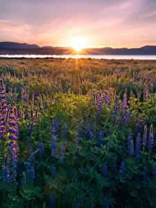Bilder Vereinigte Staaten Sonnenaufgänge und Sonnenuntergänge See Lupinen Landschaftsfotografie Kalifornien Lichtstrahl Sonne Lake Tahoe Natur