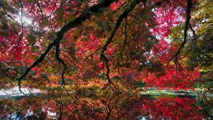 Image Canada Gardens Pond Autumn Vancouver Branches VanDusen Botanical Garden