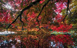 Image Canada Gardens Pond Autumn Vancouver Branches VanDusen Botanical Garden Nature