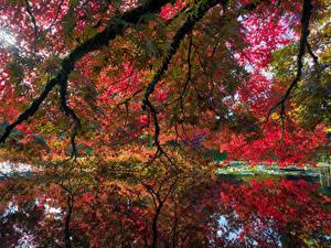 Papéis de parede Canadá Jardims Lagoa Outono Vancouver Galho VanDusen Botanical Garden Naturaleza