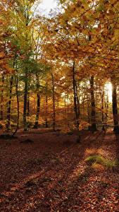 Hintergrundbilder Herbst Wälder Bäume Blattwerk