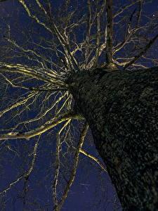 Fotos Nacht Baumstamm Bäume Untersicht Ansicht von unten Ast Natur