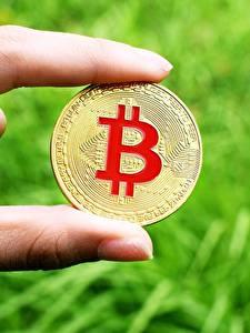 壁纸、、指、クローズアップ、Bitcoin、コイン、貨幣、金色、