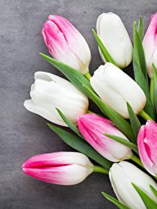 Bilder Tulpen Nahaufnahme Farbigen hintergrund Blumen