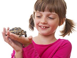 Bilder Schildkröten Weißer hintergrund Kleine Mädchen Hand Kinder