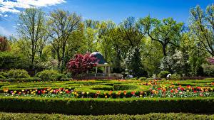 Bilder Vereinigte Staaten Garten Frühling Tulpen Bäume Strauch Missouri Botanical Garden Natur