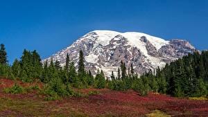 Fotos USA Park Gebirge Wälder Schnee Mount Rainier National Park, Mount Rainier, Washington state Natur