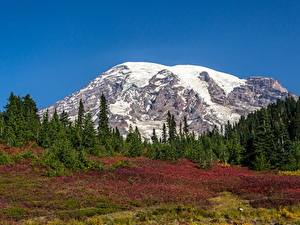 Fotos USA Park Gebirge Wälder Schnee Mount Rainier National Park, Mount Rainier, Washington state Natur