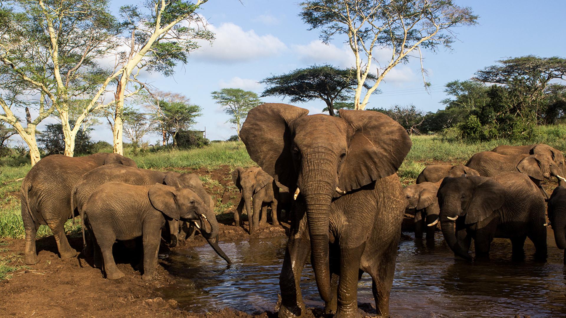 Fonds D Ecran 1920x1080 Elephant Petits Eau Animaux