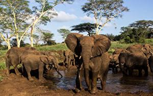 Bilder Elefanten Jungtiere Wasser