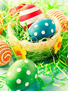 Bilder Feiertage Ostern Ei Nest Design