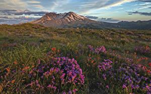 Bilder USA Park Fingerhüte Landschaftsfotografie Hügel Gras Mount St. Helens National Park