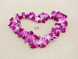 Fotos Valentinstag Grauer Hintergrund Herz Blütenblätter Schmuck Ring 2 Blumen