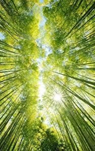 Hintergrundbilder Bambusgewächse Untersicht Ansicht von unten Natur