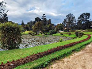 Fotos Sri Lanka Park Teich Design Strauch Queen Victoria Park Natur