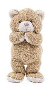 Bilder Teddybär Weißer hintergrund
